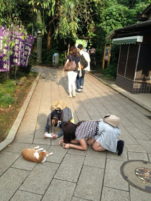 cat, girls, and japan image