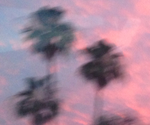 palm trees, beach, and pink image