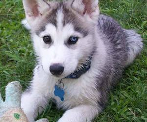 animal, aww, and blue eyes image