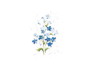 flower, overlay, and template image