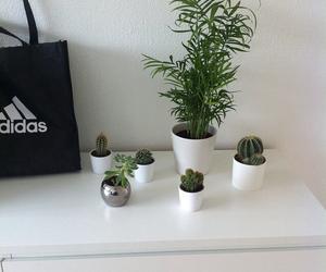 adidas, calm, and plants image