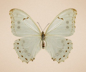 butterfly, lovely, and vintage image