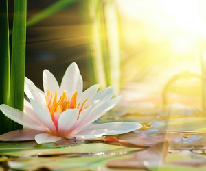 flowers, beautiful, and water image