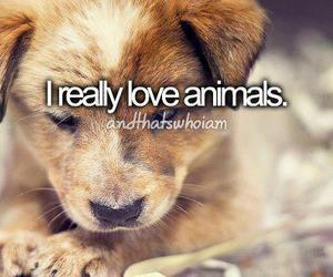 animal, love, and dog image