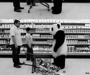 panda, funny, and black and white image