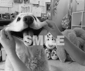 smile, dog, and animal image