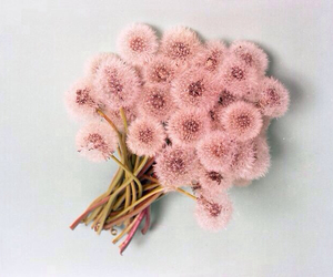 flowers, pink, and dandelion image