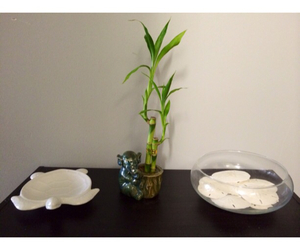 apartment, decoration, and bamboo image