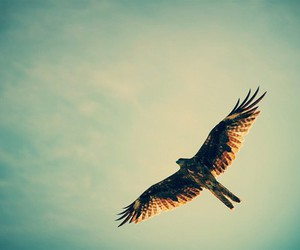 bird, sky, and eagle image