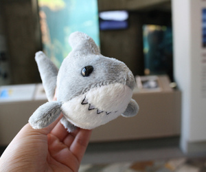 shark, photography, and toys image