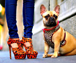dog, high heels, and leopard image