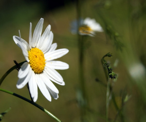 flowers, nature, and norway image