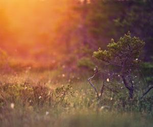 nature, beautiful, and photography image