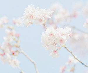 nature, flowers, and pastel image