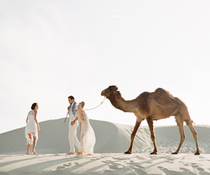 camel, desert, and sand image