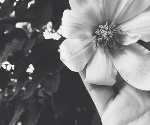black, white, and photography image