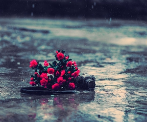 flowers, photography, and rain image
