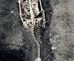 mermaid, skeleton, and bones image