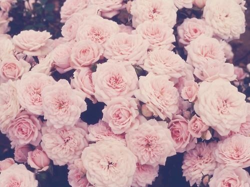 Pink Pastel Roses Uploaded By L F On We Heart It