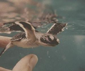 baby, swimming, and cute image