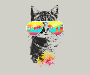 cat and summer image