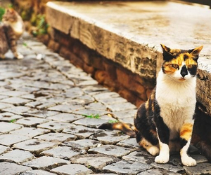 cats, italy, and rome image