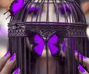 butterfly, purple, and cage image