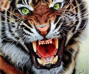 tiger, animal, and roar image