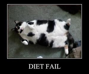 diet, cat, and fail image