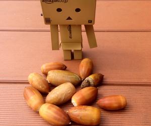 acorn, japan, and autumn image