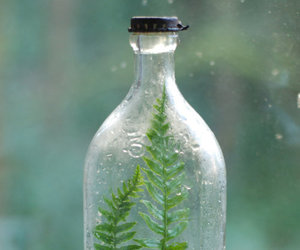 bottle and plant image