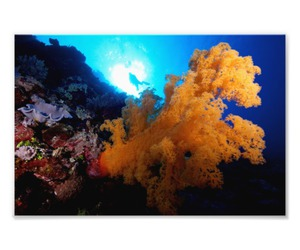 beautiful, coralsea, and colorful image