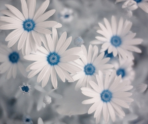 flowers, blue, and white image