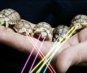 laser, turtle, and animals image