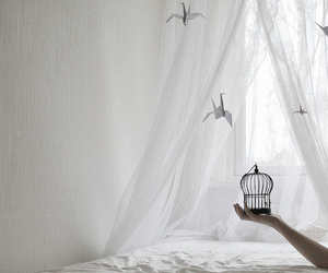 bird, white, and cage image