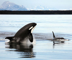 whale, ocean, and orca image