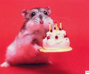 hamster and birthday image