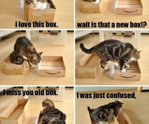 box, cat, and change image