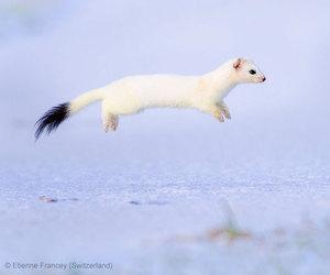 animal, white, and snow image