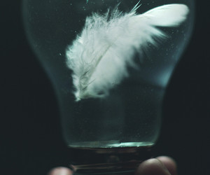 bulb and feather image