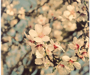flowers, apple blossom, and spring image