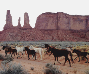 animal, montain, and horse image