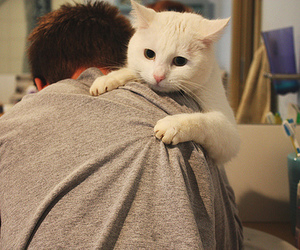 cat and boy image