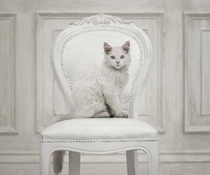 cat, white, and chair image