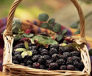 blackberry, fruit, and healthy image