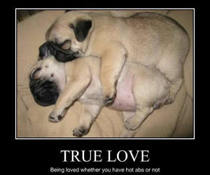 dog, true love, and puppy image