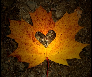 heart, leaves, and fall image