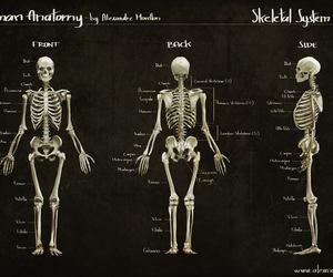 bones, doctors, and medicine image