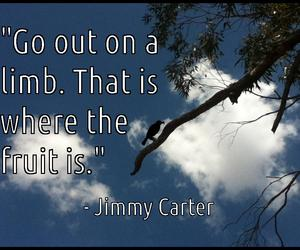 fruit, quotes, and fun image