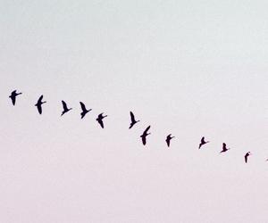 bird, birds, and black image